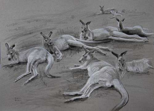 Seven Greys Resting, Study for Pride of Every Field